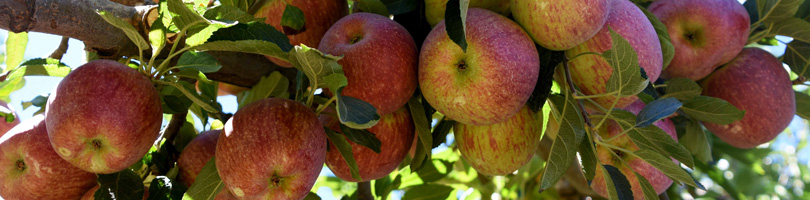 Graaff Fruit - Accreditation