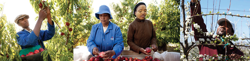 Black Economic Empowerment - Graaff Fruit