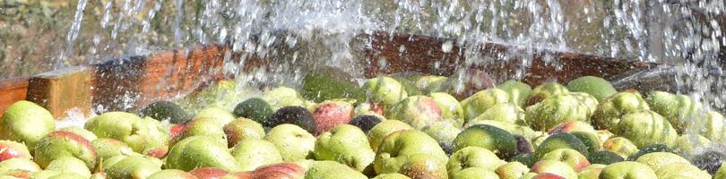 Graaff Fruit - Food Safety