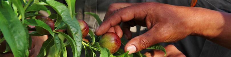 Graaff Fruit - Management Team