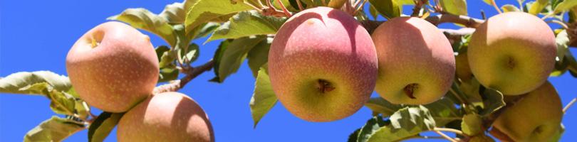 Graaff Fruit - Varietals
