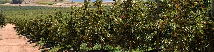 Graaff Fruit - Partners