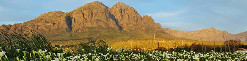 Graaff Fruit - Sustainability