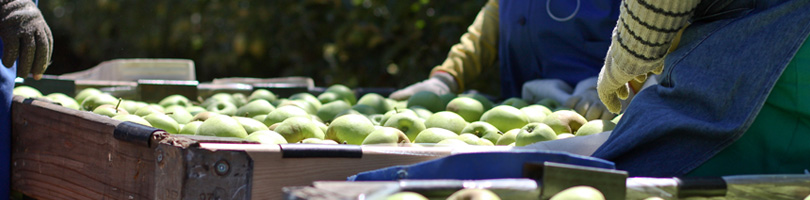 Graaff Fruit- Our Business